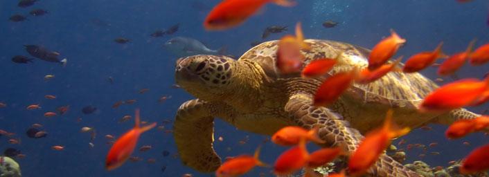 Marine life at Sipadan island in Malaysia
